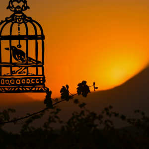 Image Of Bird In A Cage Against A Setting Sun